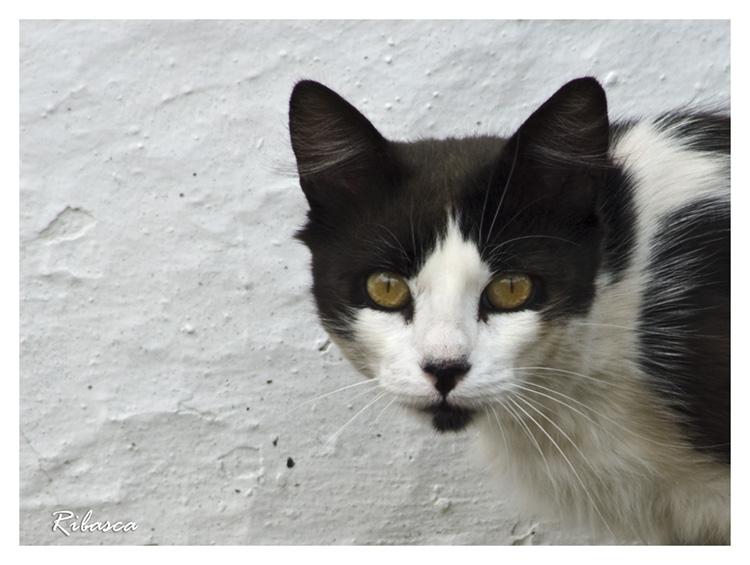 ¡Eh! gato... en Otros temasgato.jpg